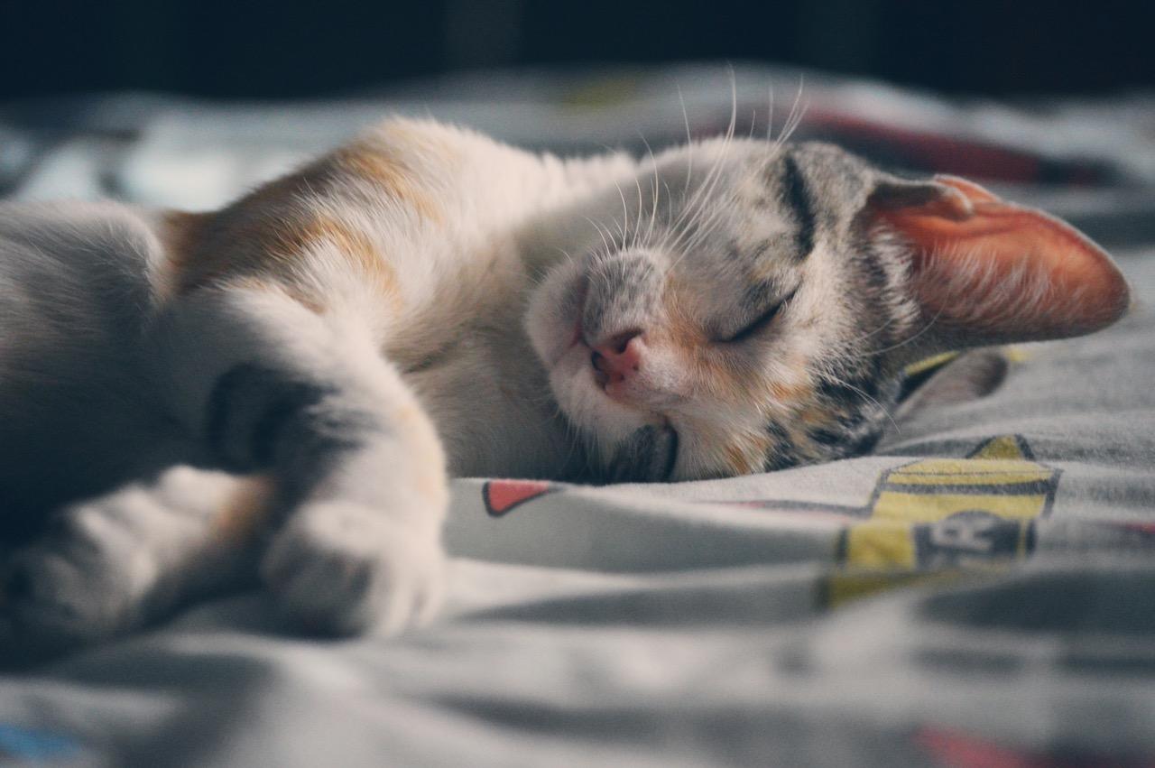 Kočka - spánek