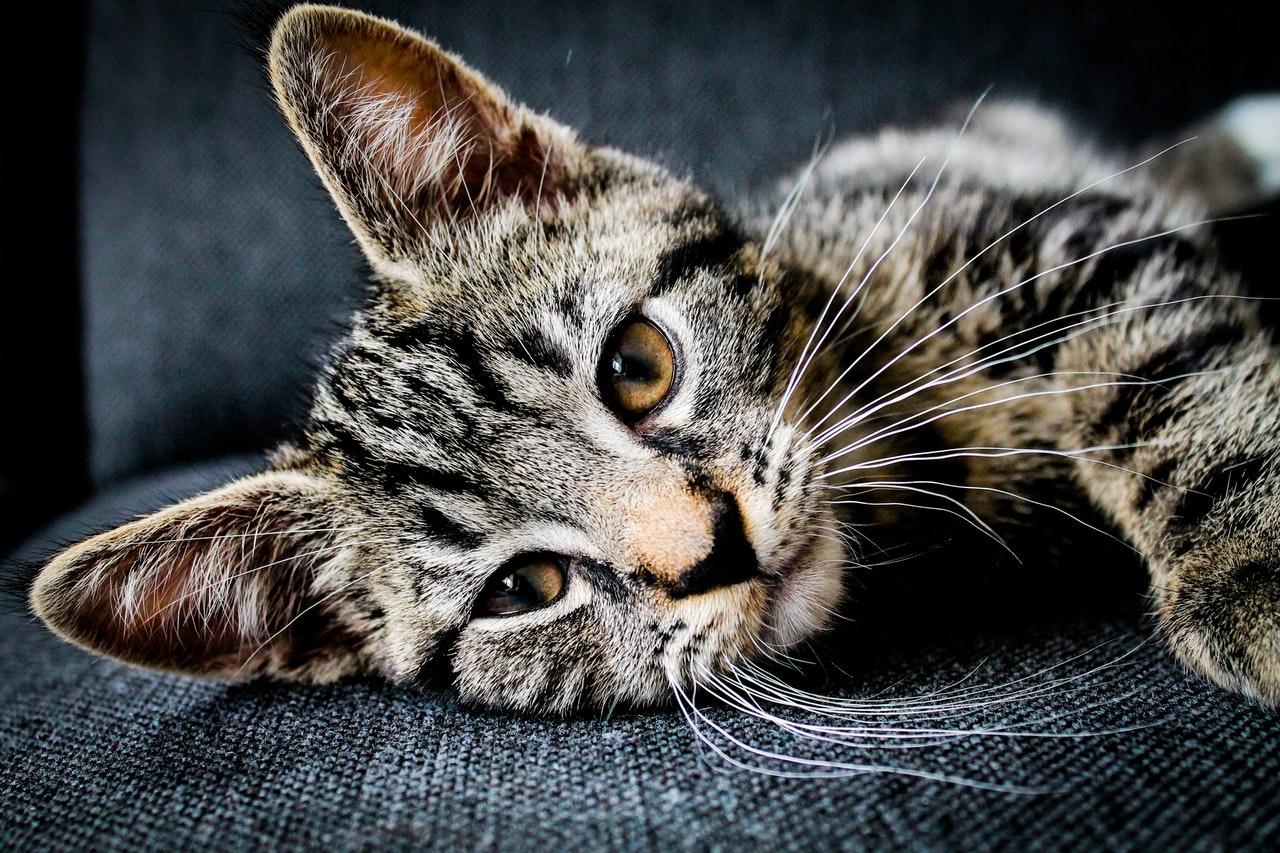 Www.wet kočička