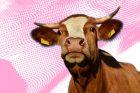 Mikrovlnky - krávy poslouchají vážnou hudbu