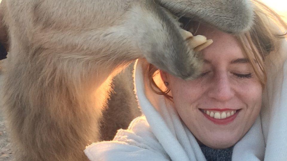 Velbloud, co se snaží sníst můj šátek poté, co jsme náhodou narazili na skupinku nehlídaných velbloudů v poušti