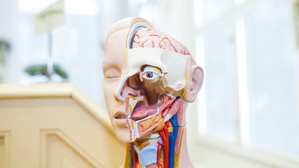 Muzeum normální a srovnávací anatomie 1. LF UK