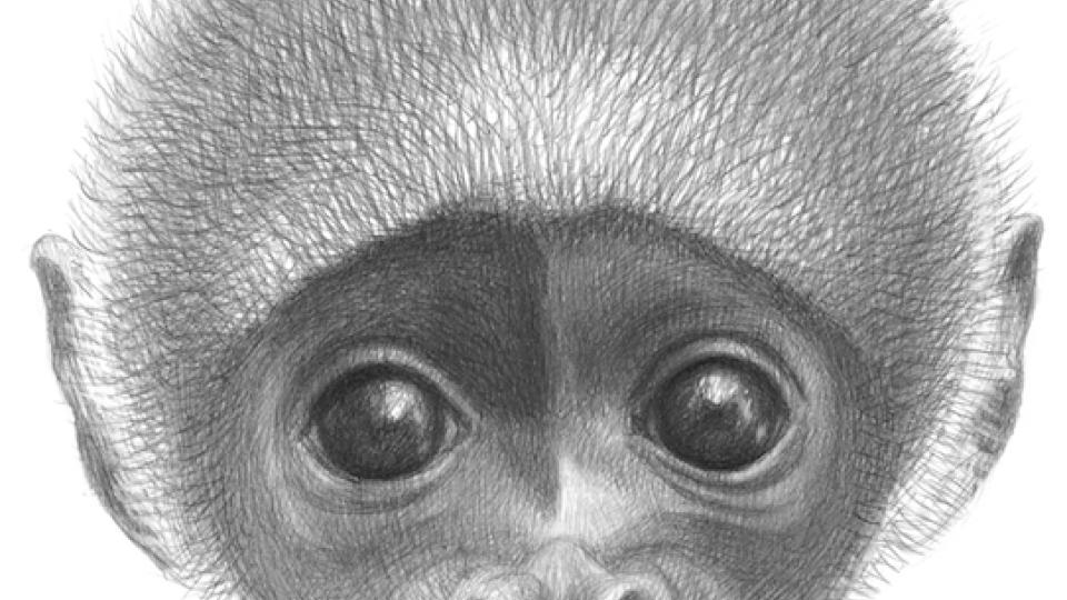 Ilustrace z knihy Jino taje opic Petra Nikla