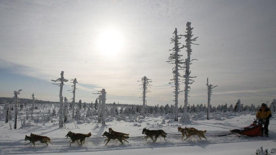 300 kilometrů po hřebenech, extrémní stoupání, bivakování na sněhu i nepředvídatelné počasí. Šediváčkův long, mezinárodní závod psích spřežení