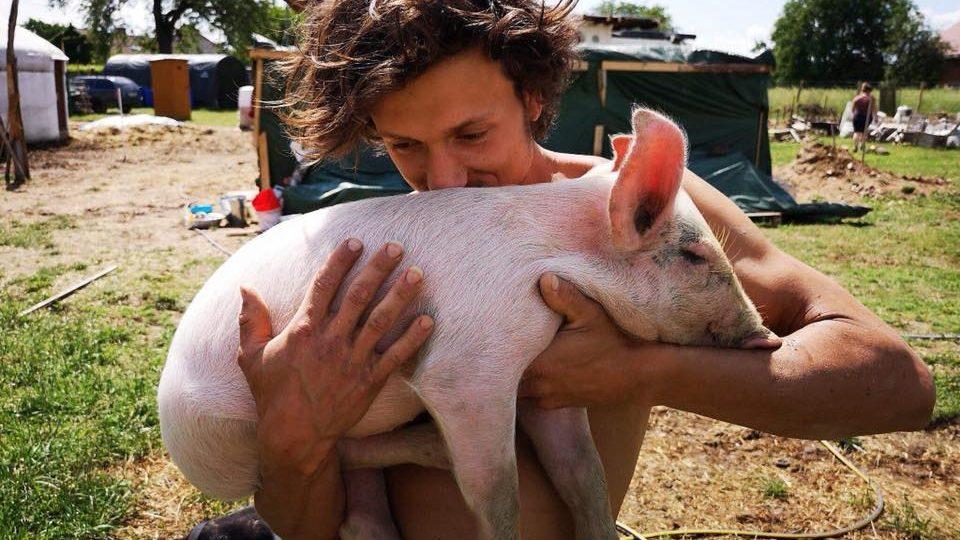 Farma Naděje zachraňuje zvířata z jatek