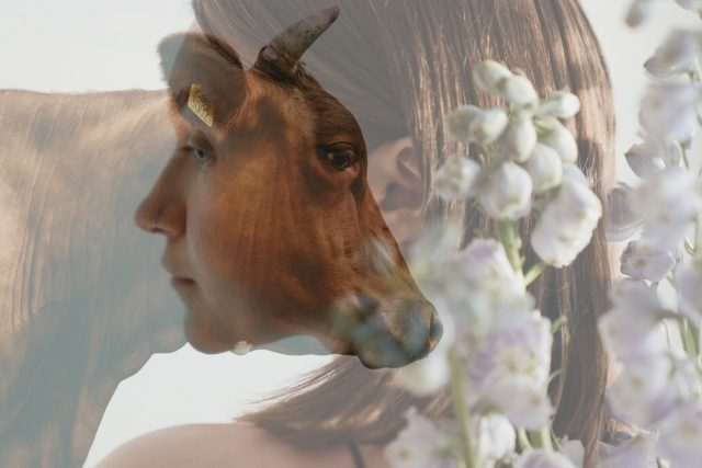 žena a kráva