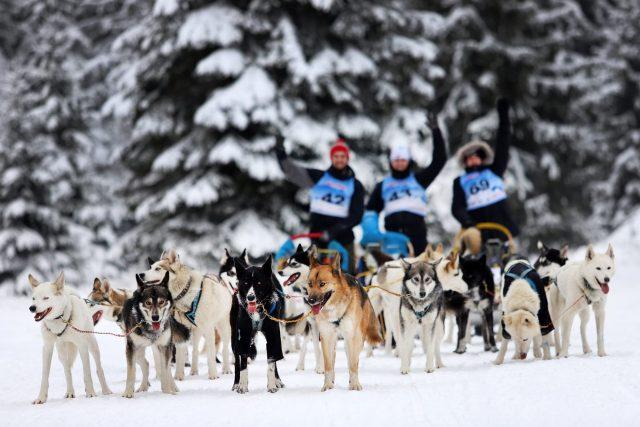 300 kilometrů po hřebenech, extrémní stoupání, bivakování na sněhu i nepředvídatelné počasí. Šediváčkův long, mezinárodní závod psích spřežení na dlouhé trati