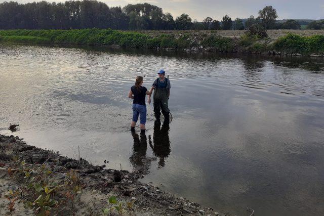 Několik desítek tun ryb uhynulých v řece Bečvě otrávily kyanidy