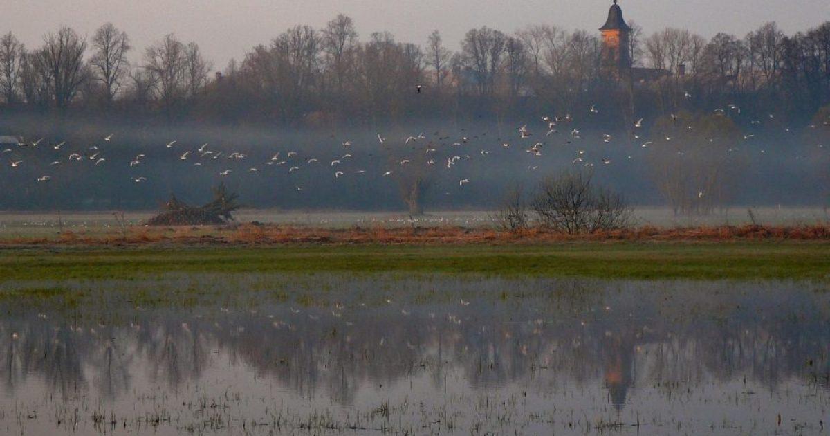 Bílí kluci s velkými ptáky
