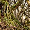 kořeny - les
